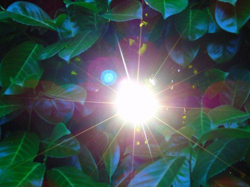 """©www.lichtwesenfotografie.com  """"Ich bin das Licht"""""""