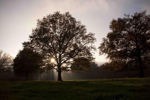 Bocage au petit matin...© H. et N. Braconnier