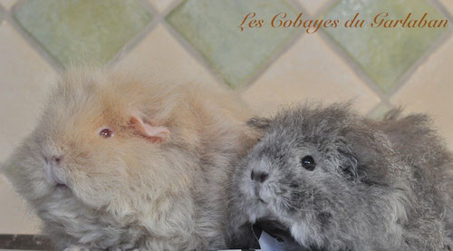 Gingembre & Olga, le 11/11/13