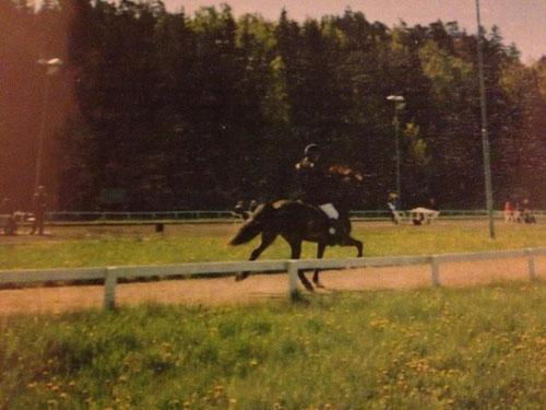 Eros fra Keldudal, min fina häst! Häringe- 01