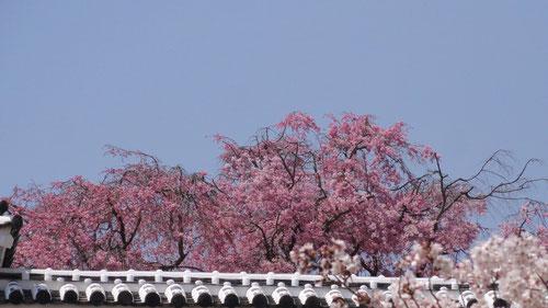 姫路城にて25.4