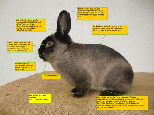 der erste Blick entscheidet maßgeblich über Marderkaninchen, der zweite Blick bringt die Feinheiten ans Tageslicht
