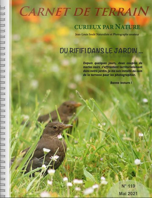 oiseaux, Merle noir, photographie animalière, Biodiversité, Passereaux, Jean-Louis Soulé