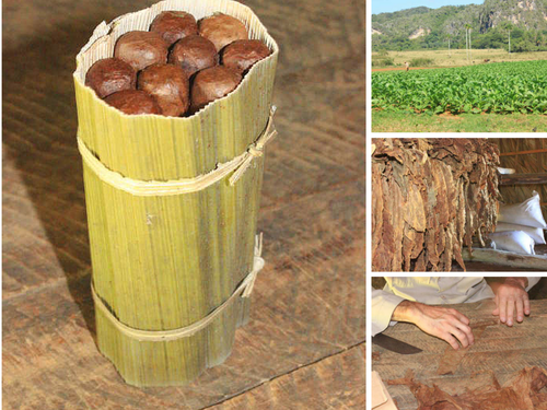 Zigarrenrollen in Vinales auf Kuba