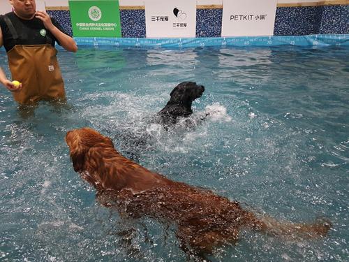 Hundeschwimmen - Eurasia 2 Shopping Mall, 4. OG