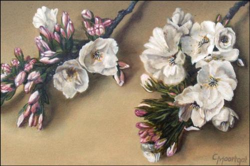 Lentebloesem  -  Olieverf op doek  30 x 50 cm
