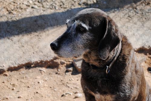 Dori - zusammen mit Dorita - das NEUNTE Jahr im Tierheim!