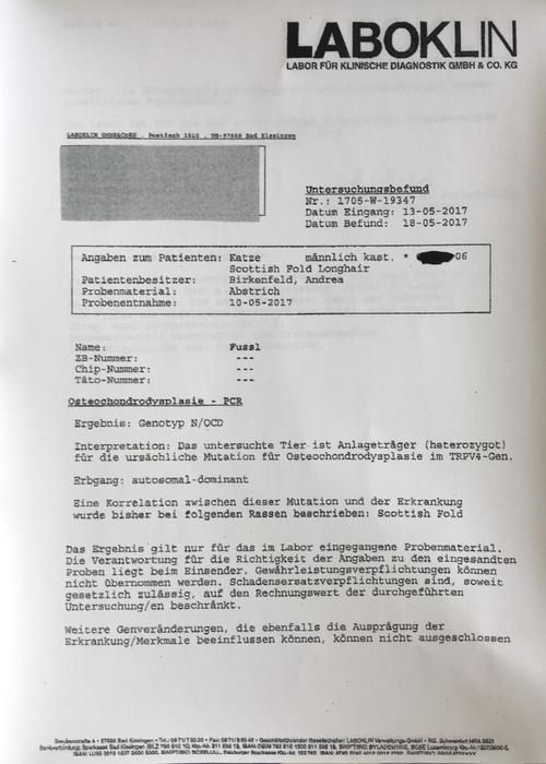 DNA-Test von Faltohrkater Fussl (OCD/ocd), der an Osteochondrodysplasie erkrankt ist