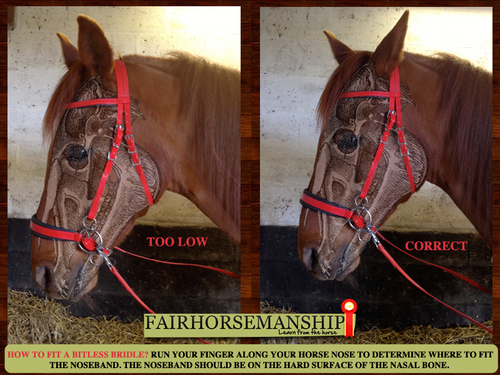 how to choose the right bridle for your horse