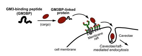 TOC (Biomacromoleculesより)