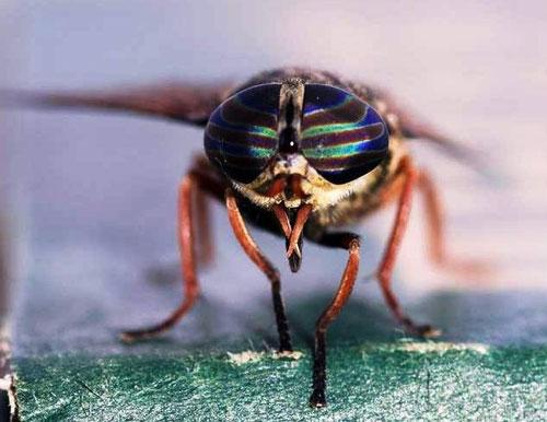 gadfly, tuer le taon