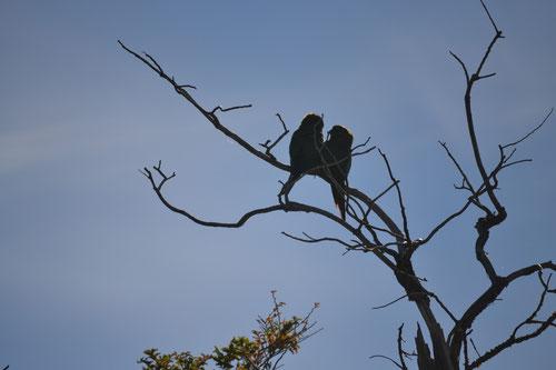 Loros en un árbol