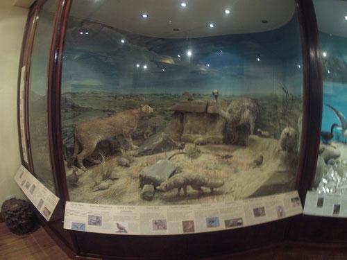 Diorama de animales en el Museo de la Patagonia