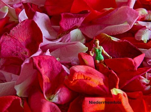 im Blütenmehr