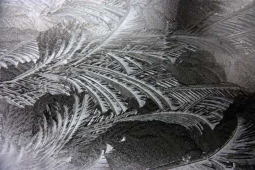 Eisblumen im Treibhaus
