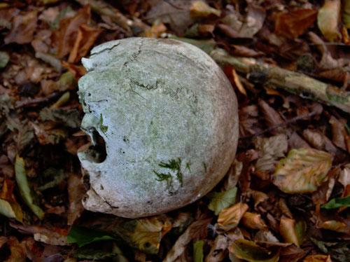 ein grausiger Fund, doch auch das ist Natur ein skelletierter menschlicher Schädel im Wald .....