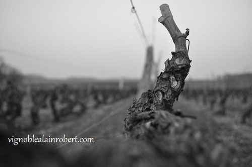 pruning-workshop-Vouvray-vineyard-Loire-Valley-Loire-Wine-Tours-Myriam-Fouasse-Robert