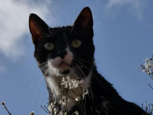 Katze Lilly wurde hier in unserer Heider Kleintierpraxis abgegeben. Jetzt erkundet sie in Ihrem neuen Dithmarscher Zuhause den Garten.