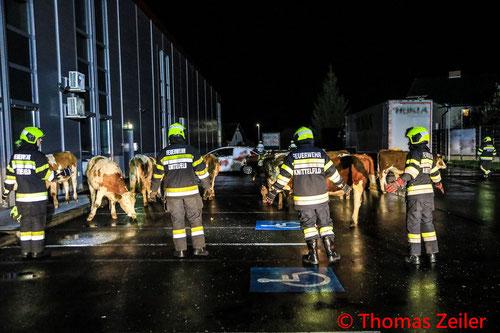 Feuerwehr; Blaulicht; BFV Knittelfeld; Kühe; Stadtgebiet;