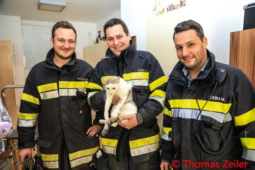 Feuerwehr, Blaulicht, Tierrettung, Katze, Kühlschrankverbau, Apfelberg