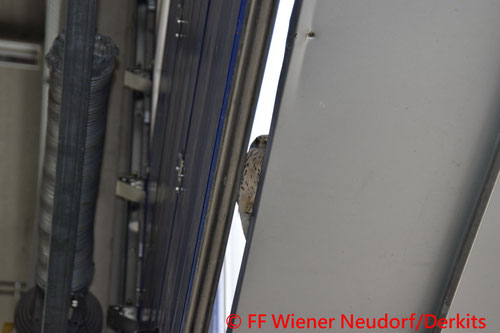 © Freiwillige Feuerwehr Wiener Neudorf/Derkits