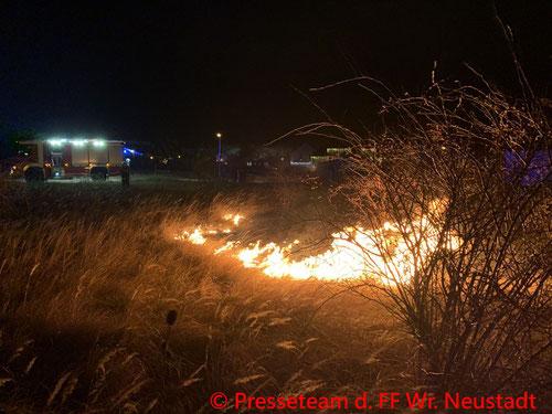 Feuerwehr; Blaulicht; FF Wiener Neustadt; Brand; Silvester; Müllinsel; Flurbrand;
