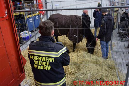Feuerwehr; Blaulicht; FF Wiener Neudorf; PKW; Vorgarten; Unfall;