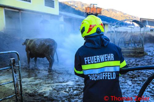 Feuerwehr; Blaulicht; BFV Knittelfeld; Kuh; Jauchegrube; Befreiung;