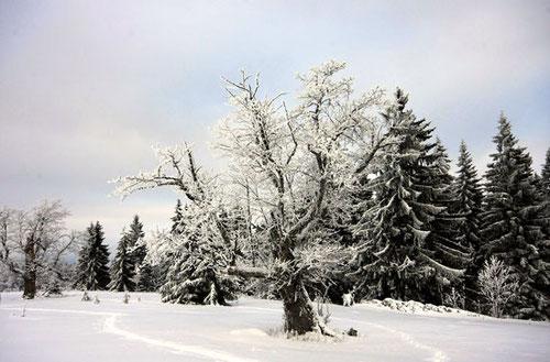 Winterpauschale