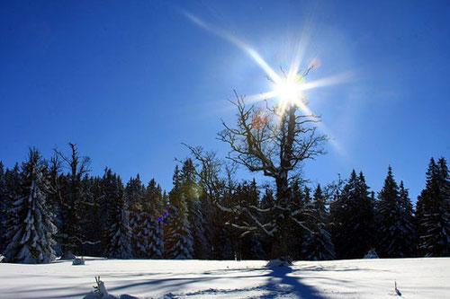 Winterpauschale Spuren im Schnee
