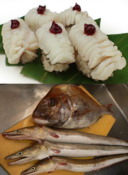 ハモの握り 寿司 デリバリー