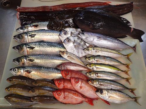 未利用魚 低流通魚 有効利用
