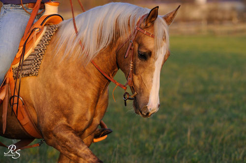 Westernreiten, BeeGee, Sebastian Nolewajka, Romal Reins, Palomino Horse