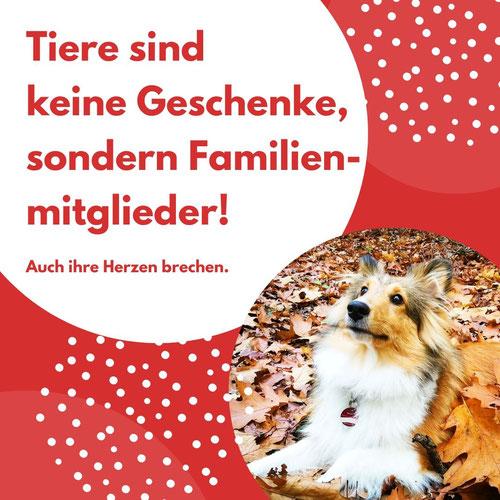 Tiere sind keine Weihnachtsgeschenke, Ich biete Textdienstleistungen für Selbstständige und Freiberufler
