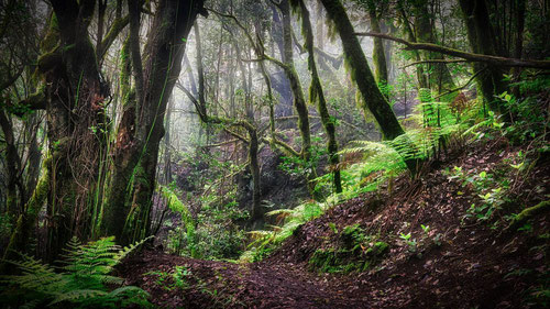 La transformación en los usos del suelo puede incrementar las amenazas naturales de los bosques. Foto (cc): Jörg Bergmann / Flickr