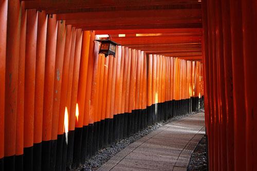Small Torii at Fushimi Inari Kyoto
