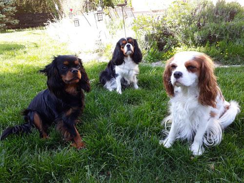 von links nach rechts:   Lola, Amy, Zoe