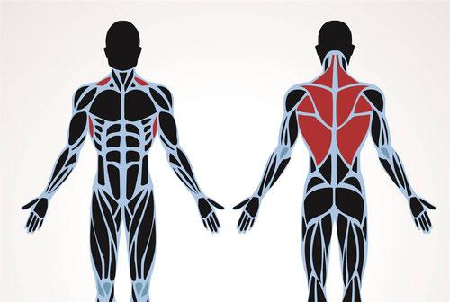 Rückenschmerzen Rückentraining Kraft Rücken Rüdiger Bülow Training is personal