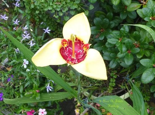 Blume, Copyright: Ilona M. Schütt, www.basenfasten-hamburg.net