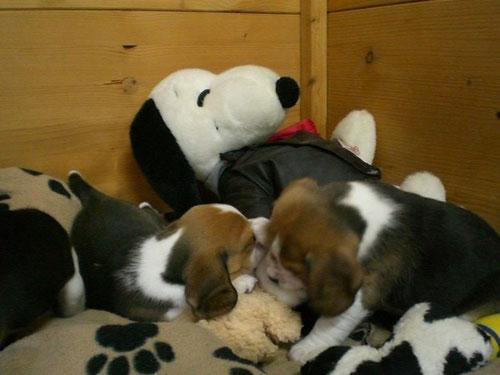 Alle gegen Snoopy...