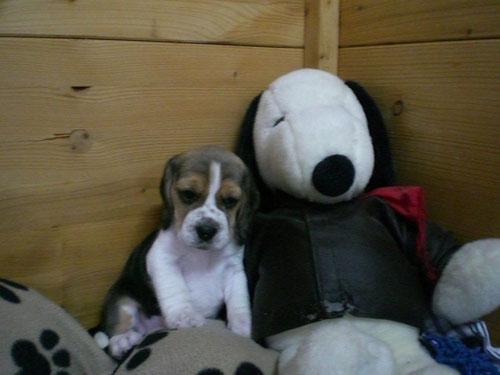 Mein Freund Snoopy und ich...