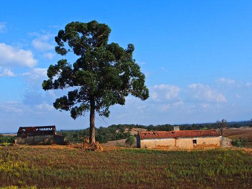 einfaches Bauerngehöft in herrlicher Umgebung
