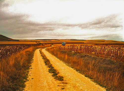 wir fuhren kilometerlang durch abgeerntete  Sonnenblumen-Felder