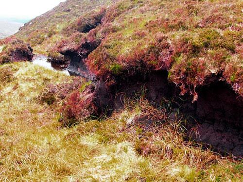 streng geschützt die Flora im National Park Connemara - für Botaniker ein Eldorado