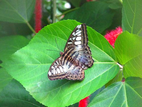 im Schmettlings-Haus sind seltene Exemplare zu bewundern