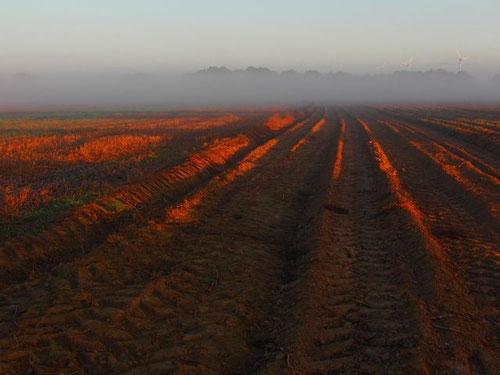 """am Rand des Feldes standen wir """"gerade"""", mit einem herrlichen  Blick auf die weite Landschaft"""