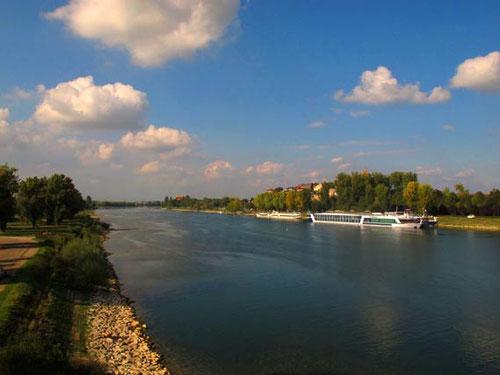 der Rhein bei Colmar