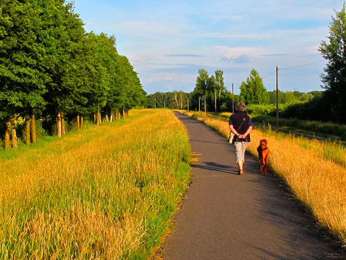 Abend-Spaziergang auf dem Spree-Damm