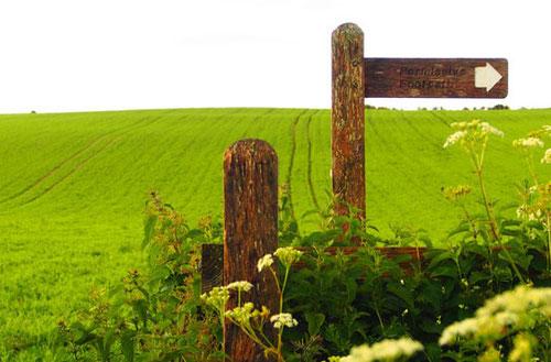 weites Erbsenfeld hinter Saltdean