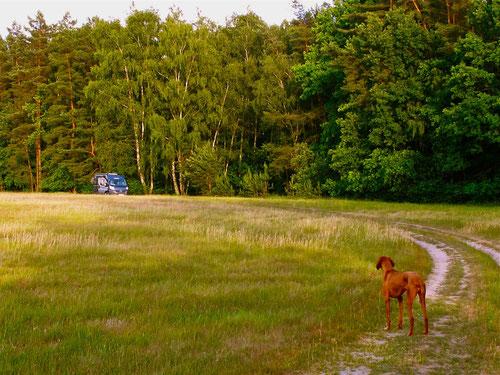 unser Abend-Stellplatz auf der Beetzer Heide-Heide